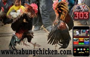 Agen Sabung Ayam Online Bonus Terbesar