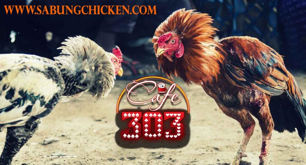 Sabung Ayam Online Bonus Jutaan
