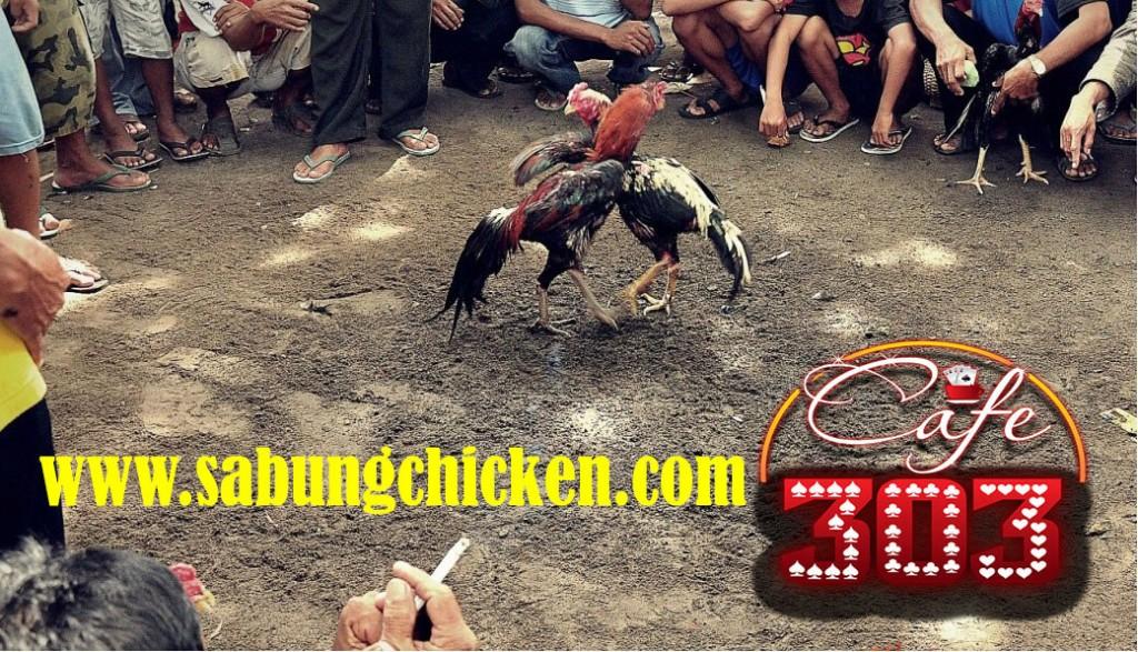 Bandar Taruhan Ayam 2018