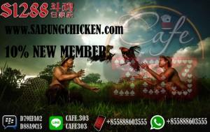 Sabung Ayam Online 2